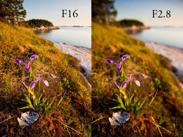DOF example flower shot